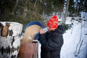 Anders Westman har många års erfarenhet av att utfodra rådjur. Foto: Katrin Rickardsson