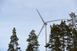 Den massiva utbyggnaden av vindkraft har fått oönskade konsekvenser. Bland annat eftersom priset på el blivit lågt. Foto: Fredrik Sandberg