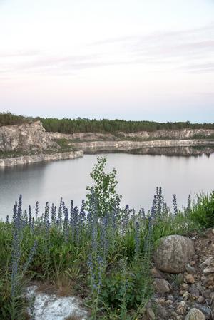 Nynäshamns kommun vill freda kalkbrottet i Stora Vika som frilufts- och naturreservat och hoppas att reservatsbildningen blir klar under det här året.