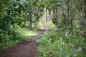 Strövområden i området kommer att påverkas av bygget av Skuggan 4.