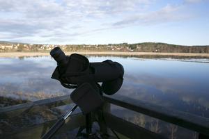 En kylig men vacker morgon i fågeltornet vid Limsjöns strand.