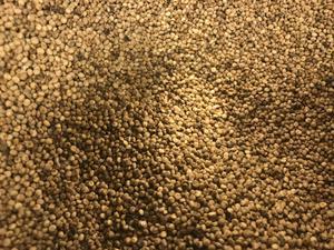 Quinoa, eller mjölmålla.