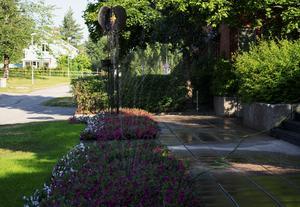 Både blommor och stenbeläggning är rejält blöta redan vid åttatiden på torsdagsmorgonen.