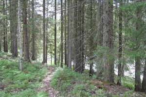 Fornminnesområdet Holm mellan Harmånger och Strömsbruk är väl värt ett besök.