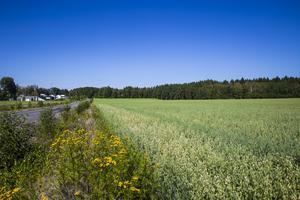 Här, på Månsbo gärde, planeras den nya stadsdelen att byggas.