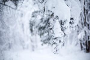 Vintern bjöd på bister kyla när år 1979 inleddes. Foto: Fotograferna Holmberg / TT