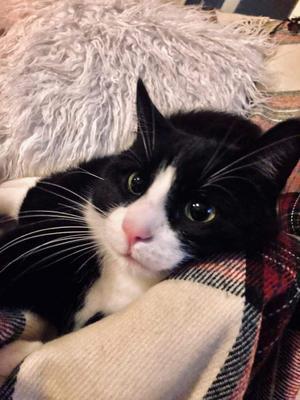 314) Katten Abbe som pysmyser på mitt rum Foto: Joanna Söder