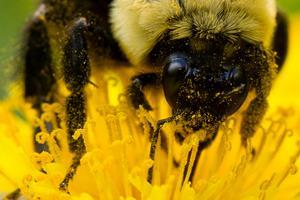 Vem pollinerar blommor och grödor i framtiden?Foto: AP/Matt Rourke