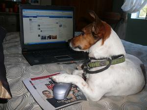 Detta ar min rescue dog nu tranad mogel hund i Los Angeles CA. Har ar en bild nar han kollar in vas som hander pa Facebook.