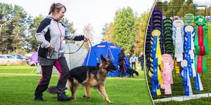 Ljusdals brukshundsklubb anordnar alltid en hundutställning varje år i slutet av september.