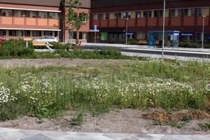 Busskuren har blivit väderskyddad och trottoaren utanför sjukhusets och Apotekets ingång har fått fokus på gående.