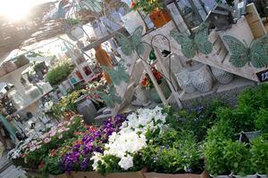 Ettåriga växter som stjärnöga, pelargon, petunia och lobelia är populära.