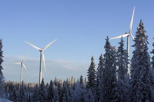 Renar och vindkraft går inte ihop i den planerade vindkraftsparken som omfattar 26 verk. Arkivbild: Jan Andersson