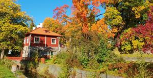 Höstbild från Koppardalen. Foto: Marita Ekberg