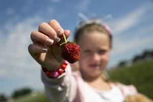 Nessa Holmgren, sju år från Falun, visar upp dagens finaste jordgubbe.