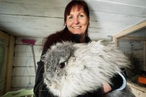 Nanna, en chinchillafärgad angorakaninen, är den första från Anette Sjölunds egen uppfödning.