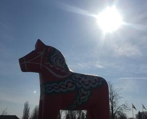 Dalahästen räds inte påverkan från en främmande sol! Foto: Göran Greider.