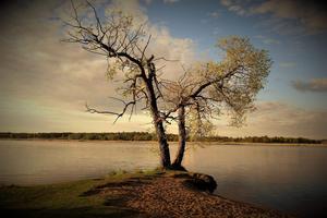 Karl-Ingemar fotade det fina dubbelträdet vid hundbadet. Numer går det inte att få de två träden på bild.