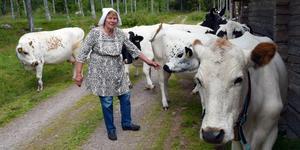 Land Alice med sina kor i fäbodgatan i Skallskog.