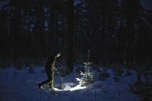 Åsikterna om vargjakten går brett isär. Svenska Rovdjursföreningen är emot licensjakten, medan Fårägare och skattebetalare i Dalarna gärna ser att ansökningarna sköts bättre i framtiden så licensjakten blir av.