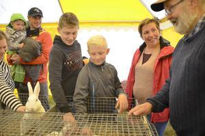 Hampus Johansson känner på den mjuka kaninen av rasen Rex, som Göran Stolpe tagit med sig.