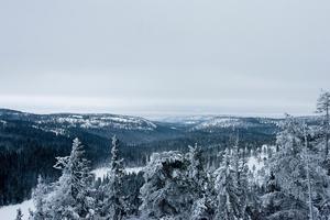 Det finns många skyddsvärda områden med gammelskog i länet.