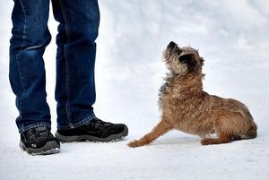 Var tid har sitt. Det där med att lära hunden sitta behöver inte tas itu med alltför tidigt. Arkivfoto: TT