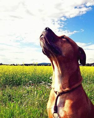 Pixie var världens goaste hund, enligt matte Tina Karlsson.