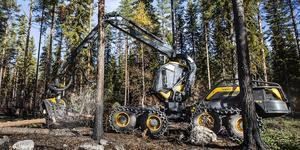 Mellanskog har totalt 26 000 skogsägare som medlemmar och omsätter ungefär tre miljarder kronor per år. Föreningen hjälper sina medlemmar med bland annat avverkning.
