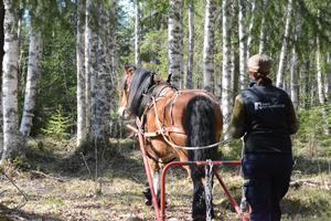 Emelie arbetar också i skogen men säger att i norra Dalarna är det främst turism hon inriktar sig på, men hon åtar sig ett och annat skogsuppdrag om någon behöver henne.
