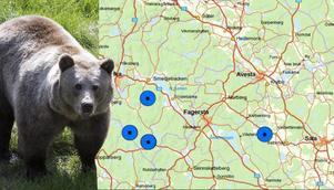 Två hanbjörnar har identifierats i norra Västmanland. Detta genom spillningsprover, som används i första hand vid inventering av björn. Detta eftersom björnarna sover på vintern, då det går att spåra i snön. Bilden är ett montage. Foto: Berit Roald, karta: länsstyrelsen.
