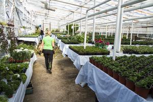 Den nuvarande butiken sitter ihop med växthusen, vilket ställer till problem vintertid.