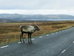 En bild av vildmarkskänslan på Stekenjokk som många besökare reser till för att uppleva.