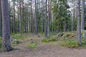 Skogsområdet på Åsen nära Björkliden och Solbacken används ofta av förskolorna. Tidigare fanns ett vindskydd, som togs bort för ett par år sedan efter vandalisering.
