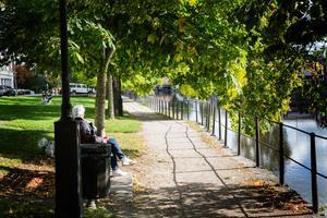 Det härliga grönskande lövverket längs med Strandvägens promenadstråk, kommer att bli mindre när det måste beskäras.