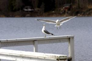 sjön runt. Det finns idéer och ambitioner från många håll för Lindesjön runt. Nu är det meningen att de ska samlas till en långsiktig utveckling av motionsslingan. Arkivbild Michael Landberg
