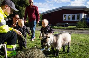 Tvillingarna Elton och Olle, från Bollnäs, tyckte om att klappa och vara nära dvärgsgeten Bengt.