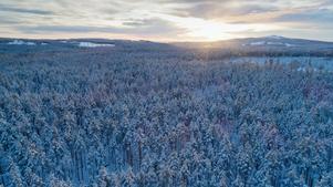 Ore skogsrike i Dalarna är ett av de områden där striden står mellan skogsindustrins, i det fallet statliga Sveaskogs, ambition att avverka och viljan att bevara gammal skog. Foto: Christian Åslund / Greenpeace