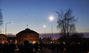 En grupp fåglar flög stämningsfullt över området bara minuter innan fyrverkerishowen skulle sätta fart.