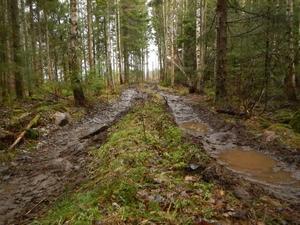 Verklighet i en alldeles vanlig skog. Foto: Peter Lindgren.