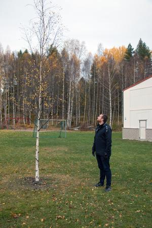 Daniel Johansson (S) tycker trädet ska bort eftersom det står i vägen för barnen som vill leka och spela fotboll eller brännboll.