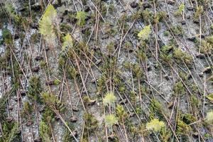 Är skogen för gles efter stormen kan man behöva kompletteringsavverka för att kunna anlägga ny skog. Foto: Henrik Ismarker, Spillersboda flygfoto.