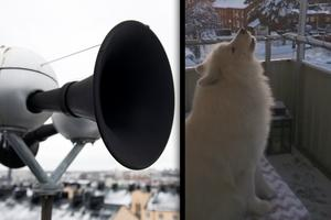 Hesa Fredrik och hunden Nelson i samklang. Bild: Henrik Montgomery / TT / Jonas Andersson.