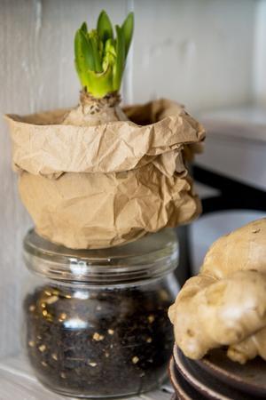 Juliga krukor. Du behöver: Kompostpåsar.Gör så här: Vänd påsen ut och in och knöla till den lite så att den blir mjuk och formbar. Trä den över valfri kruka – klart!
