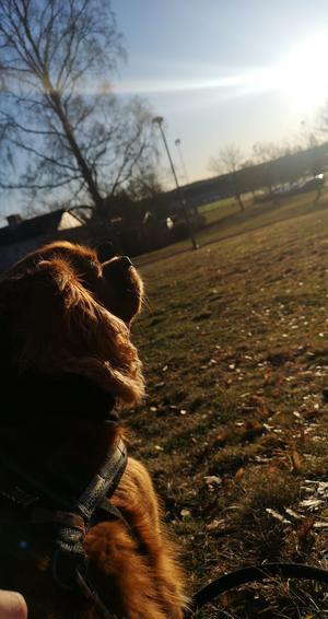 Vi tog en eftermiddagspromenad i solen, så satte vi oss i gräset och inmundigade lite solstrålar. Både husse och hund njöt till fullo, berättar Pontus.