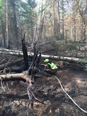 Det är svåra arbetsförhållanden i den skog som brunnit.