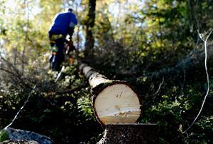 Mitt budskap är enkelt, skogen är vår kanske viktigaste näring, och därför skall EU inte lagstifta över något vi uppenbarligen kan sköta utmärkt på egen hand, skriver Liza-Maria Norlin (KD).
