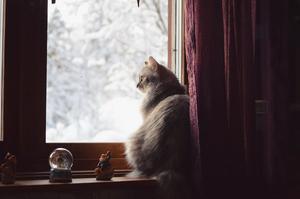 3) Zoey som i vintras placerade sig perfekt i raden tomtar för att titta ut och begrunda det vita pudret. Foto: Isabelle Tunström