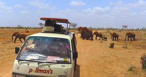 De röda elefanterna är unika för Tsavo-området men ingen annan nationalpark i Kenya har så många elefanter.