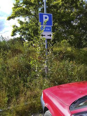 Parkeringsplatsen i Bergsåker försvinner alltmer.